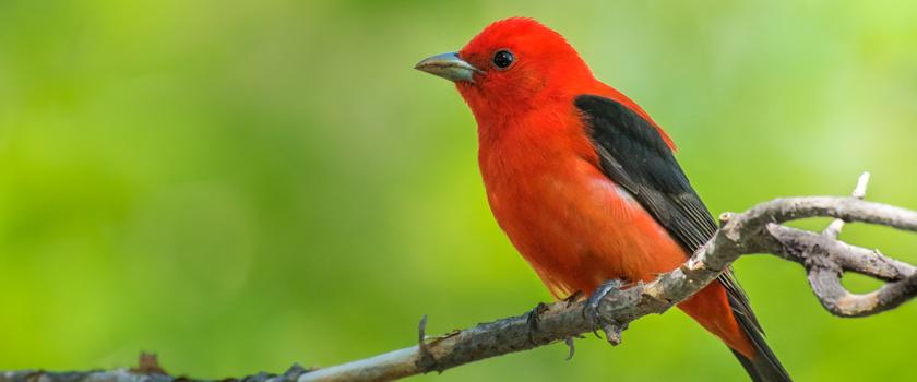 Bird-photography-II